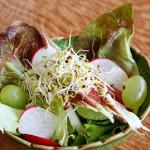 Pegando leve – mais uma salada